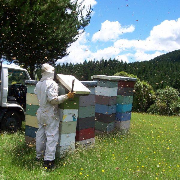 Imkerei Bienenstöcke Bienen Natur frombee Honig