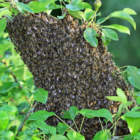 Waldhonig frombee bienen bienenstock honigwabe natur