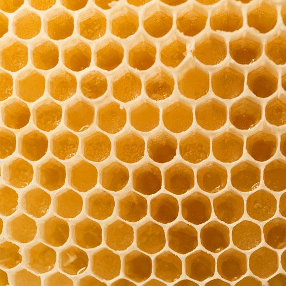 Wissenswertes rund um Honig Orangenblütenwaben Bienen Bienenstock
