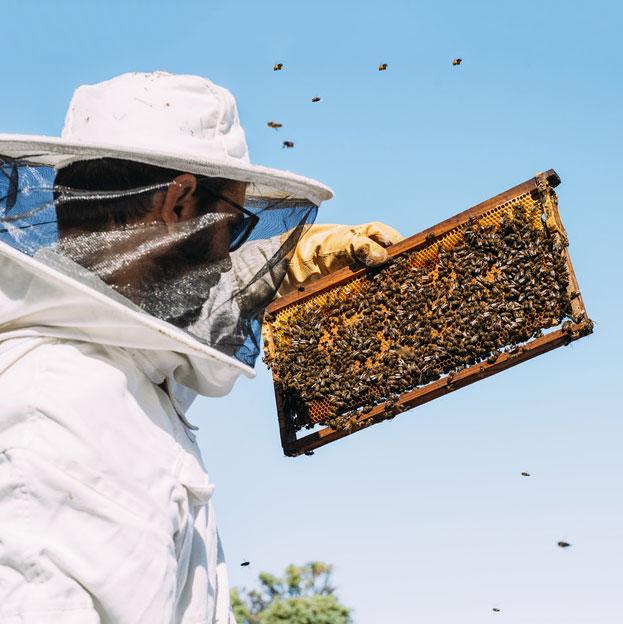 Frombee Honig online kaufen Imker Honigwabe