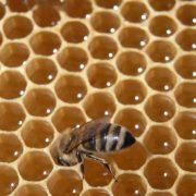 Bienenstock bienen honig honigwabe frombee wabe