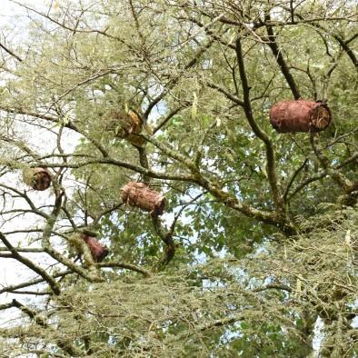 Nachhaltiges Bienenwachs, Äthiopien, Bienen, Honig, Honey, Beeswax, Honiganbau, Honiggewinnung, umweltfreundlich, fair